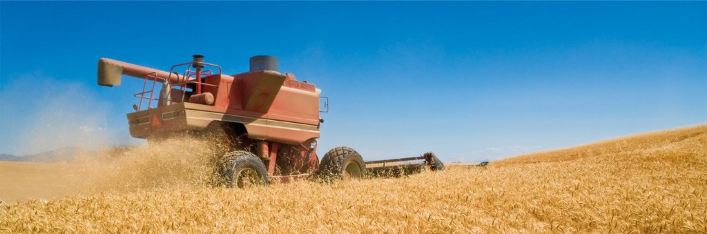 Grain being harvested | Grain Brokers