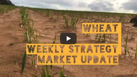 Wheat Market Strategy Update