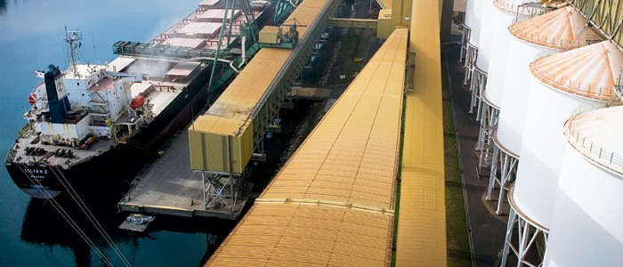 Grain being loaded onto ship | Grain Brokers